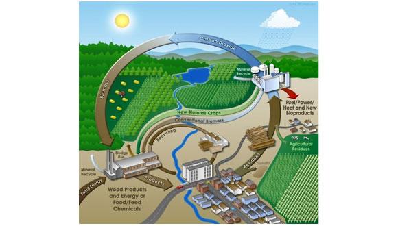 Biomass Picture
