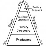 Significant Levels of Energy Pyramid Ecosystem