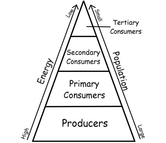 Energy Pyramid Percentages Significant Lev...